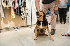 Cute_Dog_In_Store_Retail_Marketing_Event_Dreamweaver_Brand_Communications