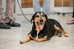 Cute_Dog_Laying_Down_In_Store_Public_Relations_Event_Dreamweaver_Brand_Communications
