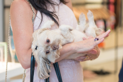 Influencer_Holding_Cute_Dog_At_Fashion_Brand_Activation_Dreamweaver_Brand_Communications